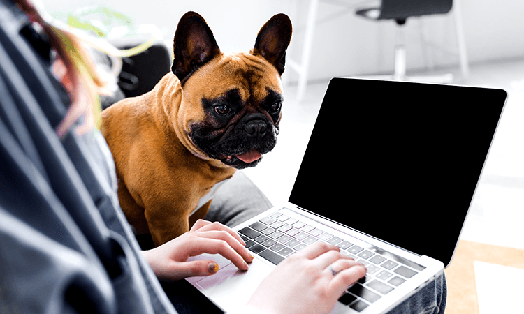 dog work from home